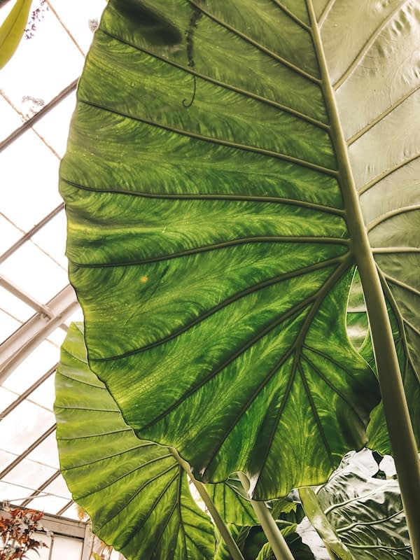 Leaf at the Biltmore Gardens - Travel by Brit
