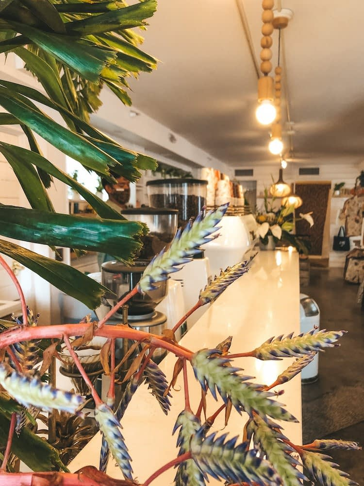 Best Places to Eat on Oahu - Olive & Oliver - Best Coffee Shops Oahu