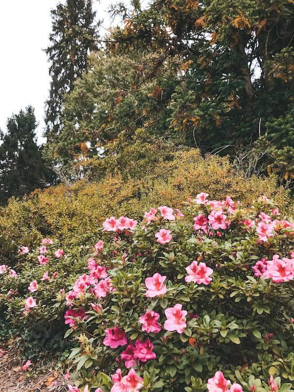 Azalea Garden at the Biltmore Gardens - Travel by Brit