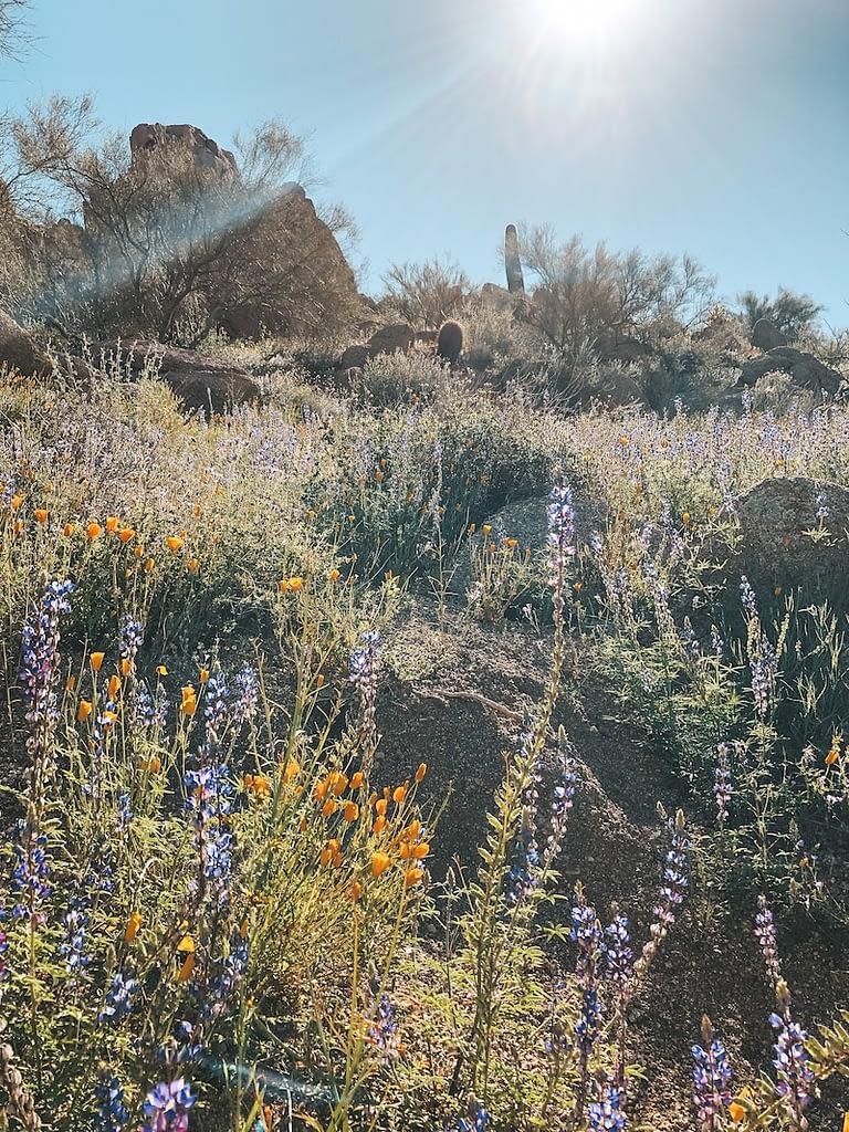 The Best Hikes in Phoenix - Pinnacle Peak